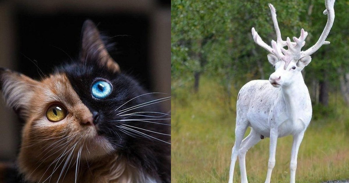 2 195.jpg?resize=1200,630 - 23 animaux cool que vous pouvez rencontrer une fois dans votre vie