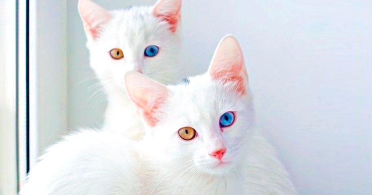 2 21.jpg?resize=1200,630 - 19 Gatos fabulosos que cuestan una fortuna