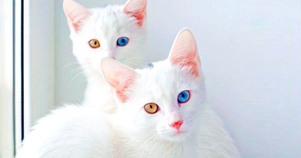 2 21.jpg?resize=412,232 - 19 Gatos fabulosos que cuestan una fortuna