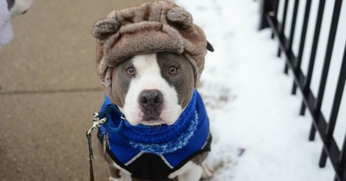 2 212.jpg?resize=1200,630 - 23 Dogs That Are Ready for the Cold