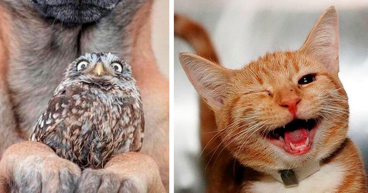 2 218.jpg?resize=1200,630 - 22 Animales que simplemente no pueden ocultar sus emociones