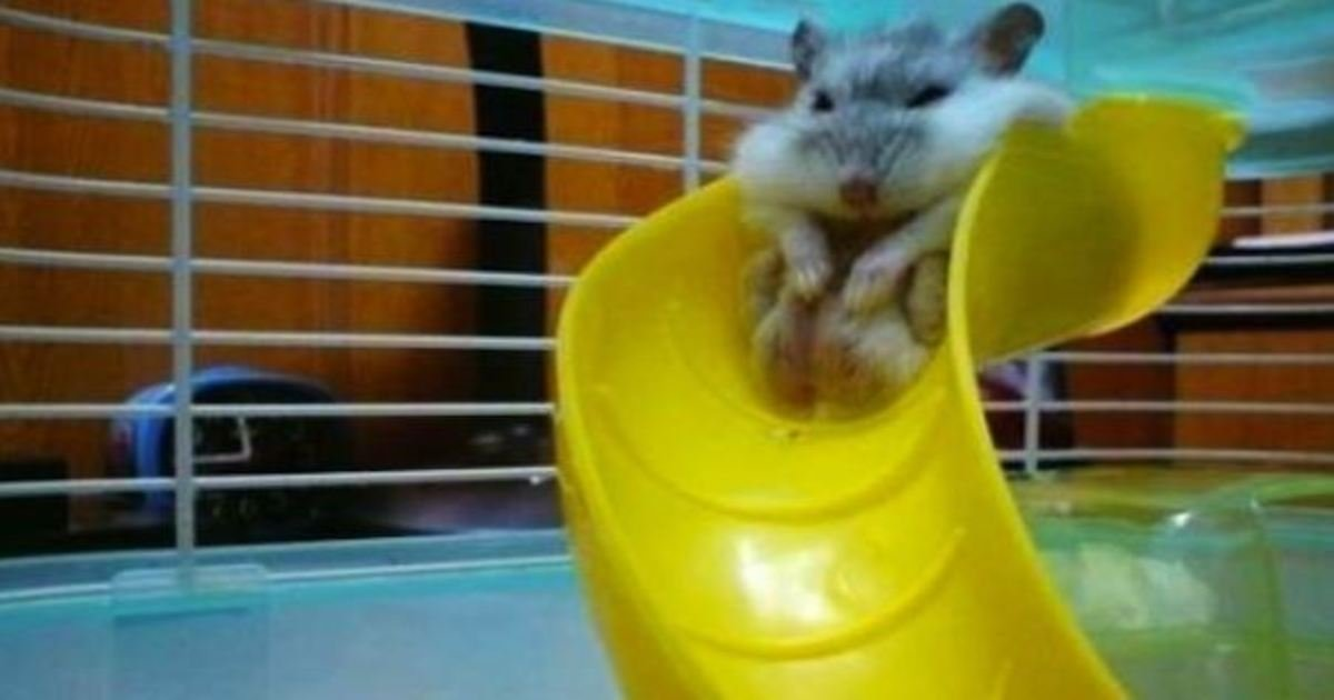 2 248.jpg?resize=636,358 - 50+ Funny Animals Caught Red-Handed In Embarrassing Positions.