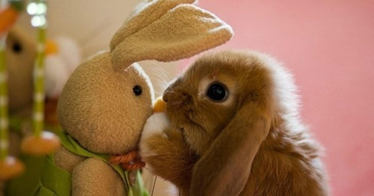 2 358.jpg?resize=1200,630 - 29 Adorable Animals Hanging out with Stuffed Versions of Themselves