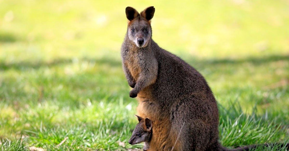 2 39.jpg?resize=1200,630 - 17 Fotos que muestran por qué Australia no es solo otro país, es un mundo completamente diferente