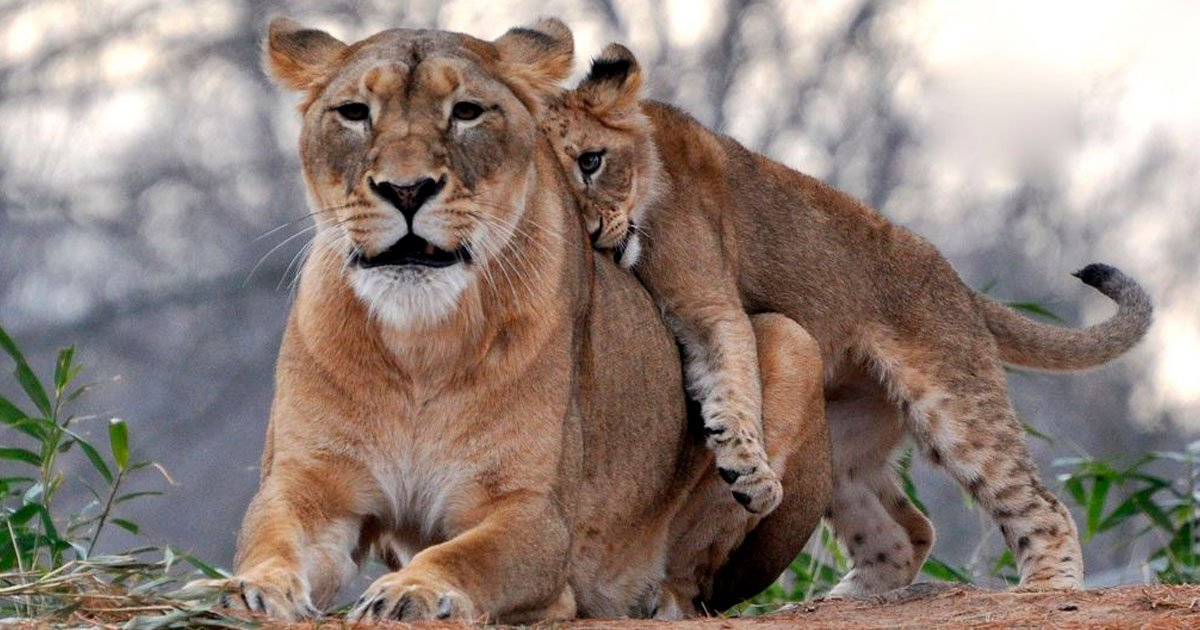 2 43.jpg?resize=1200,630 - 25 Fotos de animales que prueban que no hay nada mejor que el amor de una madre