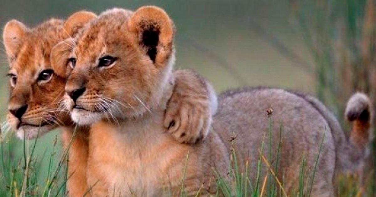 2 75.jpg?resize=1200,630 - Los 17 hermanos más adorables del reino animal