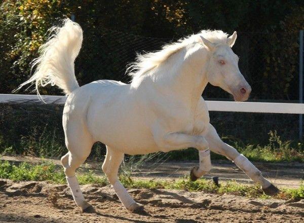 Resultado de imagen de caballo albino