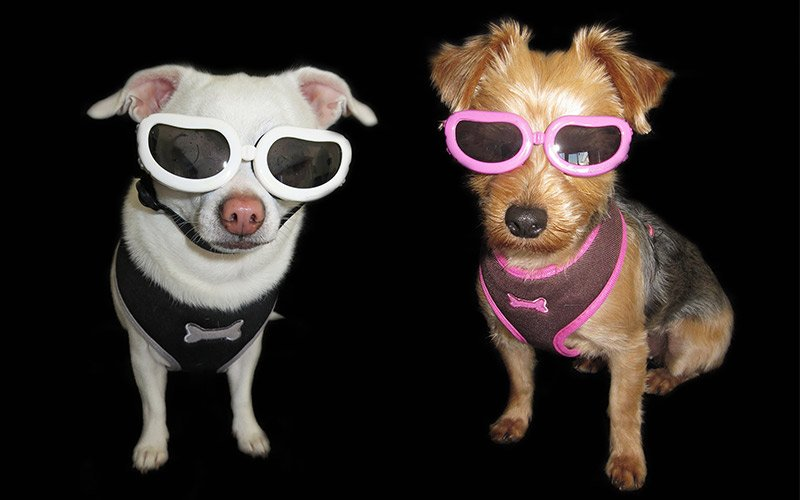 Image result for rebel funny pets