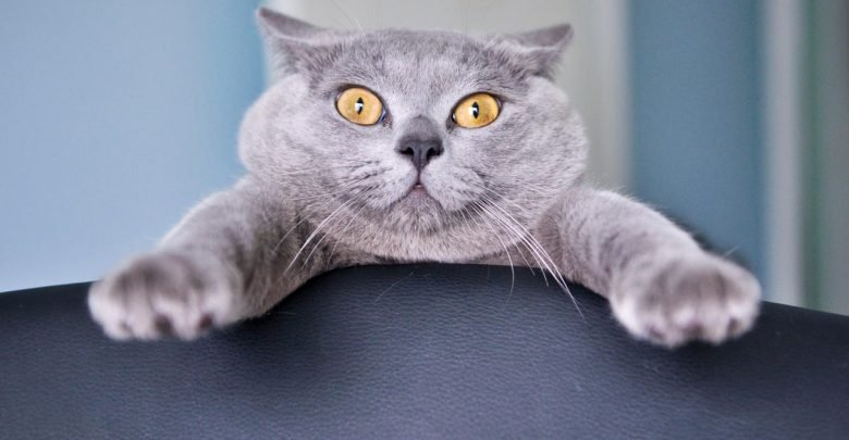 Image result for surprising pet
