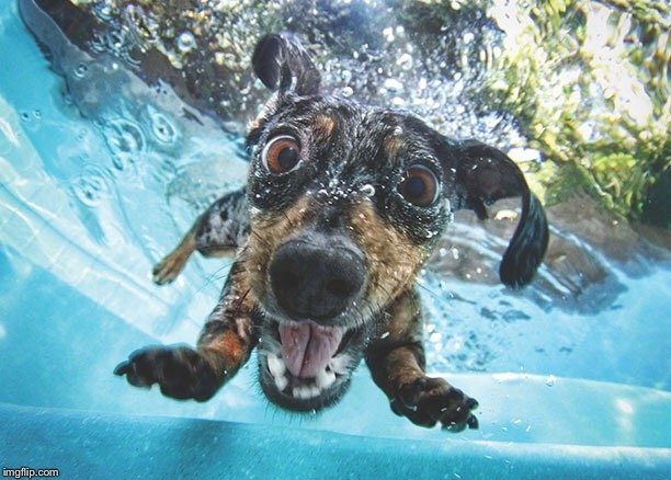 Image result for funny pet surprise
