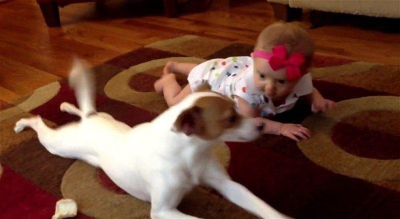 Image result for bebe aprendiendo gatear perro