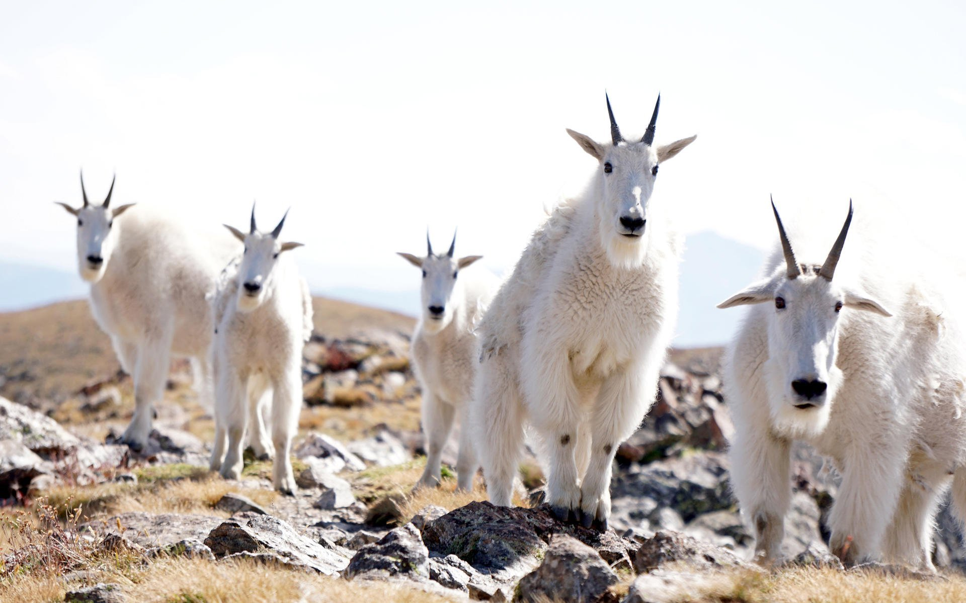 Resultado de imagen de goats hiking wear places