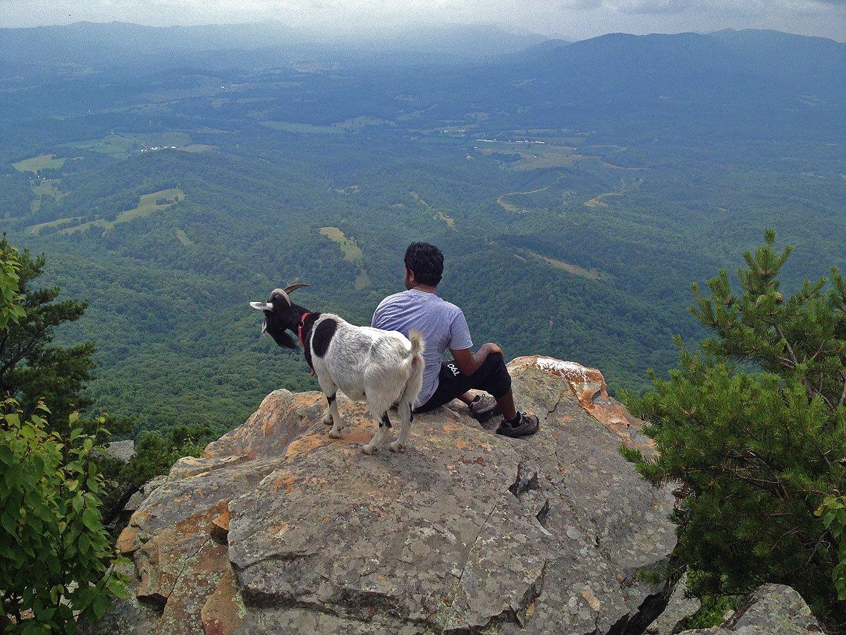 Resultado de imagen de goats hiking