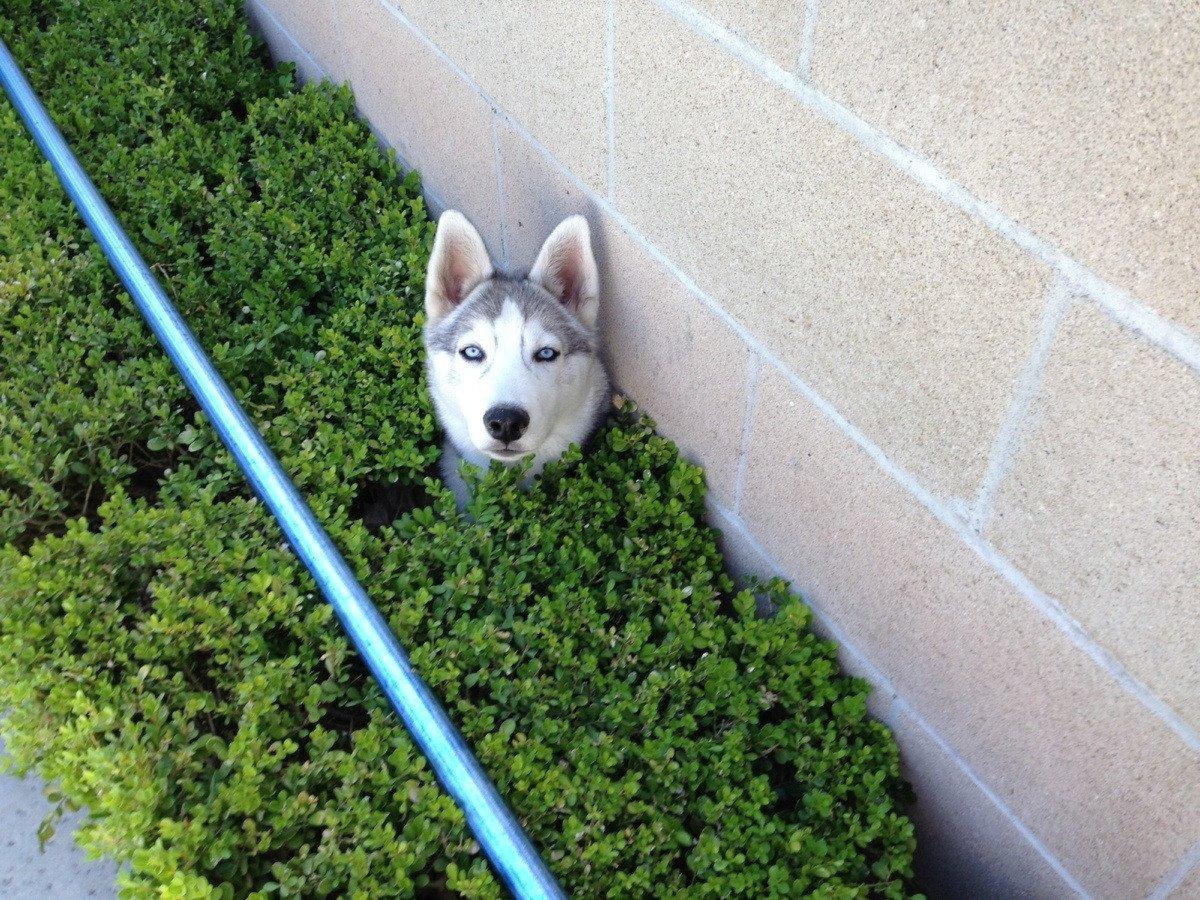 Resultado de imagen de surprise cute dog