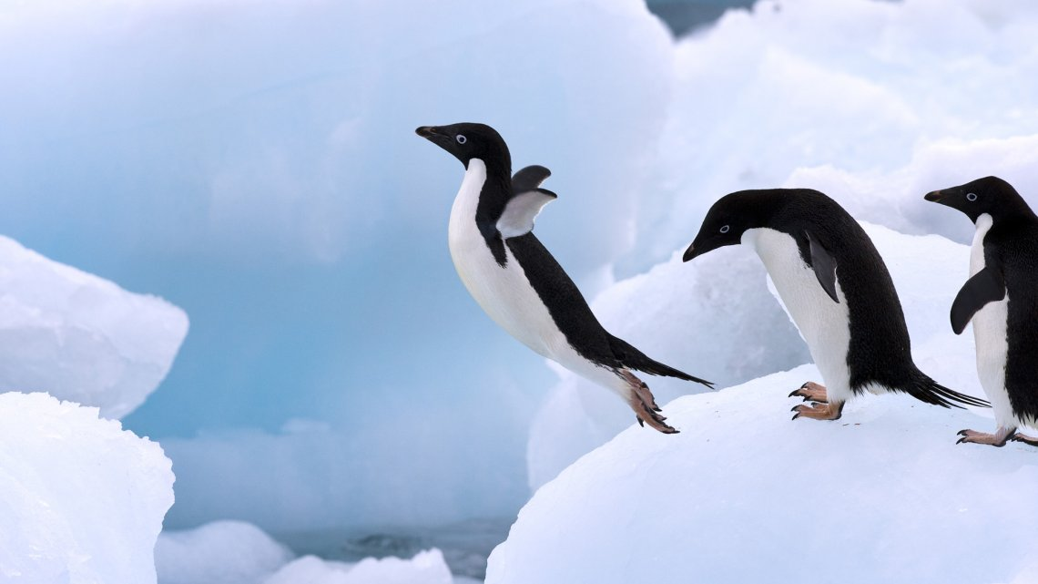 Image result for best penguin picture