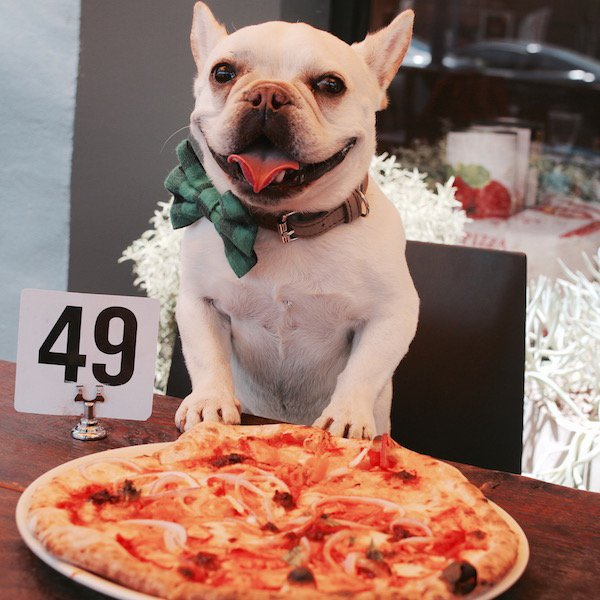 Image result for dog with a pizza