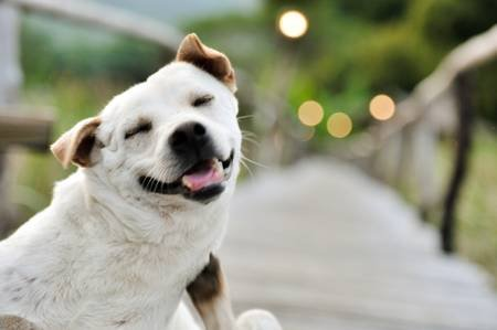 Image result for cute dog in the way