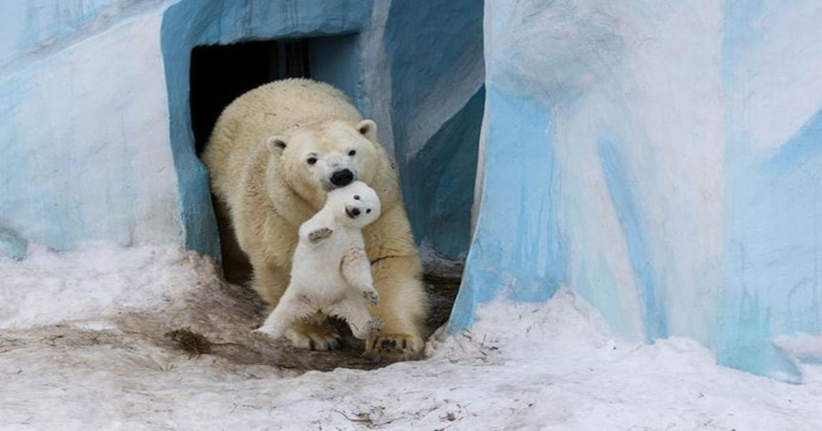 3 136.jpg?resize=1200,630 - 25+ Most Emotional Moments Of Parents In The Animal Kingdom.