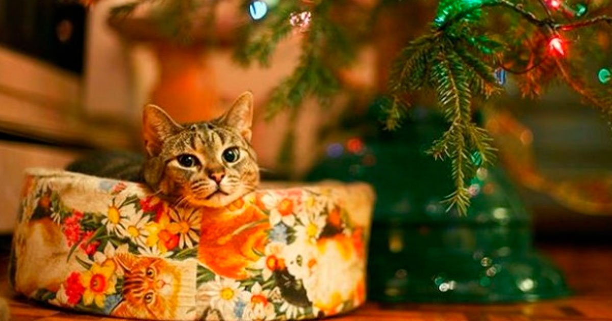 3 158.jpg?resize=1200,630 - 23 Fotos que prueban que a los animales les encanta la Navidad