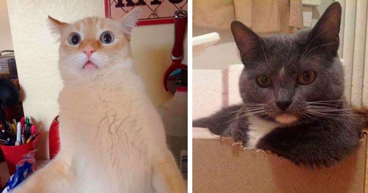 3 228.jpg?resize=412,232 - 30 Divertidos snapchats de gatitos que son realmente adorables