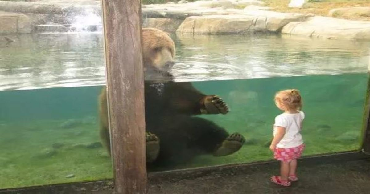 3 29.jpg?resize=1200,630 - 17 Adorable Zoo Animals That Are Happy to See Visitors