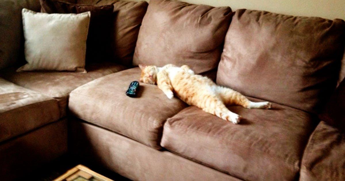 3 30.jpg?resize=412,232 - 27 Divertidos Snapchats con los que las personas con gato se sienten identificadas