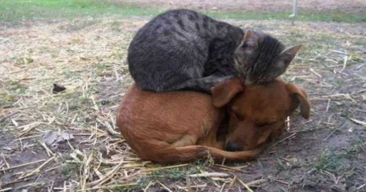 3 35.jpg?resize=412,275 - 20+ Adorable Dogs That Are Better than Pillows