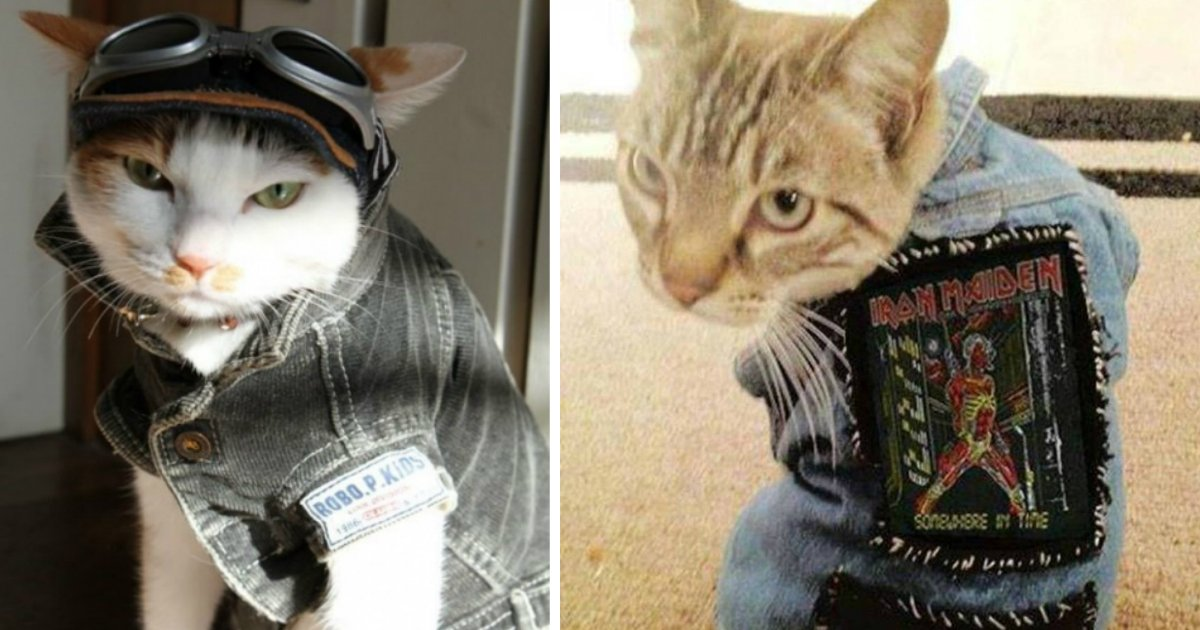 3 369.jpg?resize=1200,630 - 25 Of The Most Stylish Cats You'll Ever See