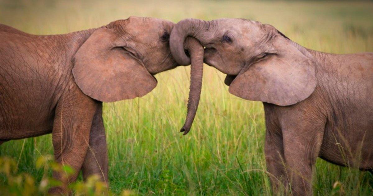 3 42.jpg?resize=1200,630 - 10 Gestos de amor que no conocías en el mundo animal