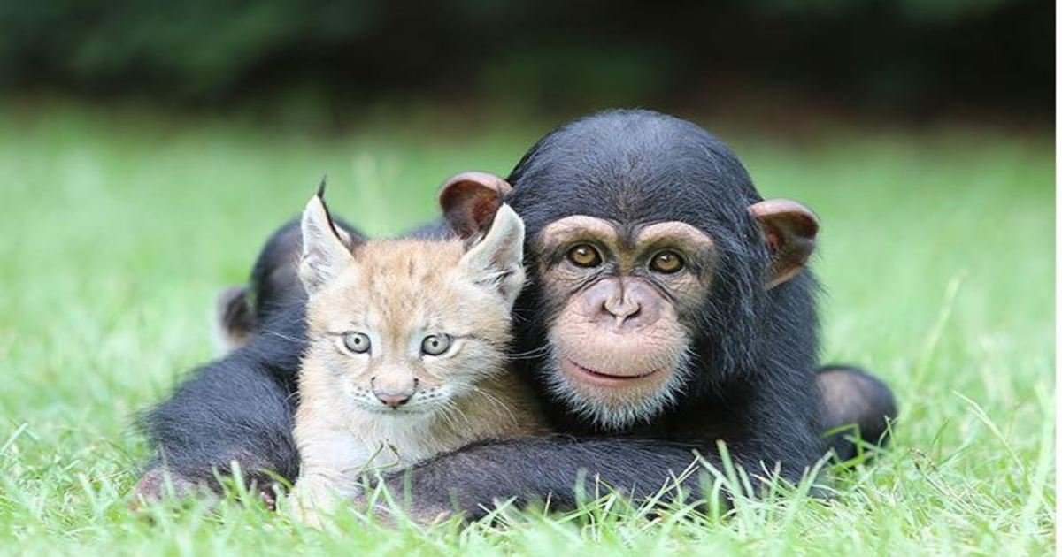4 122.jpg?resize=1200,630 - 25 Photos Of Unusual Animal Friendships That Will Put A Smile On Your Face.