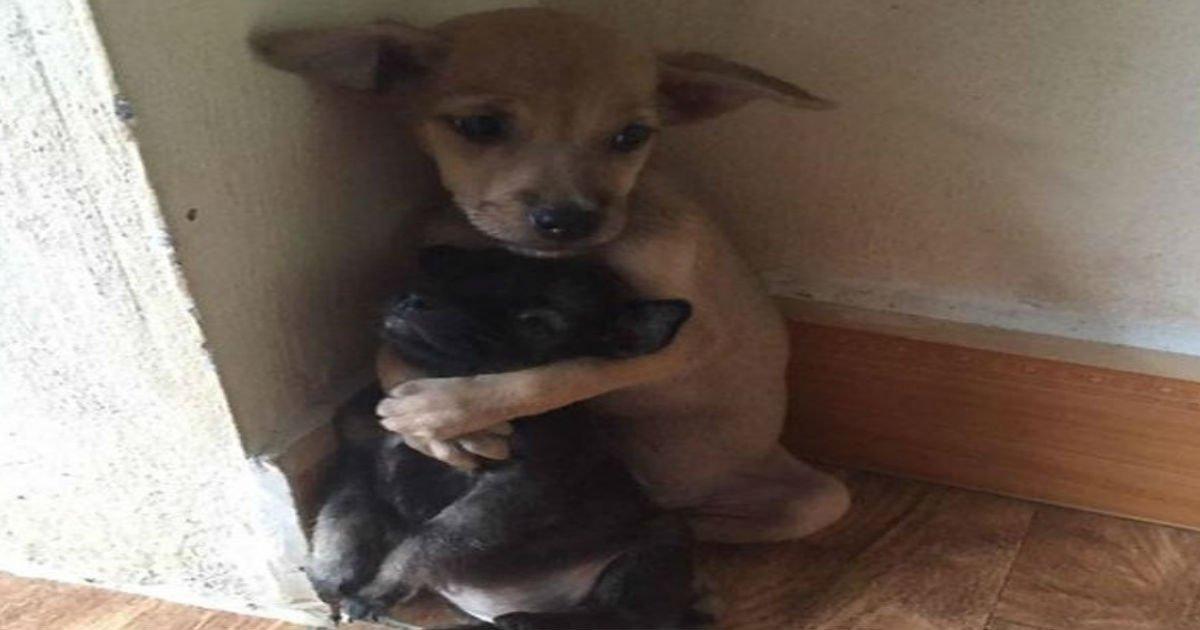 4 127.jpg?resize=1200,630 - 15 adorables photos qui prouvent que les animaux peuvent être amis aussi