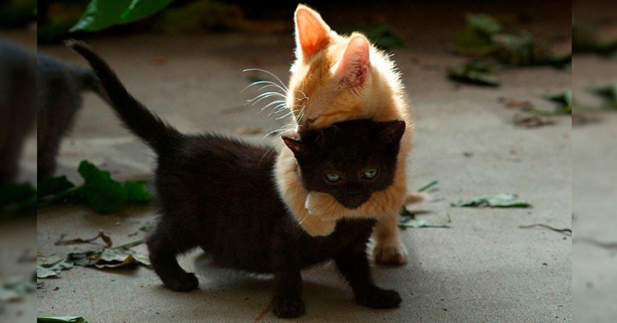 4 134.jpg?resize=1200,630 - 18 Pruebas de que los gatos son individuos multifacéticos