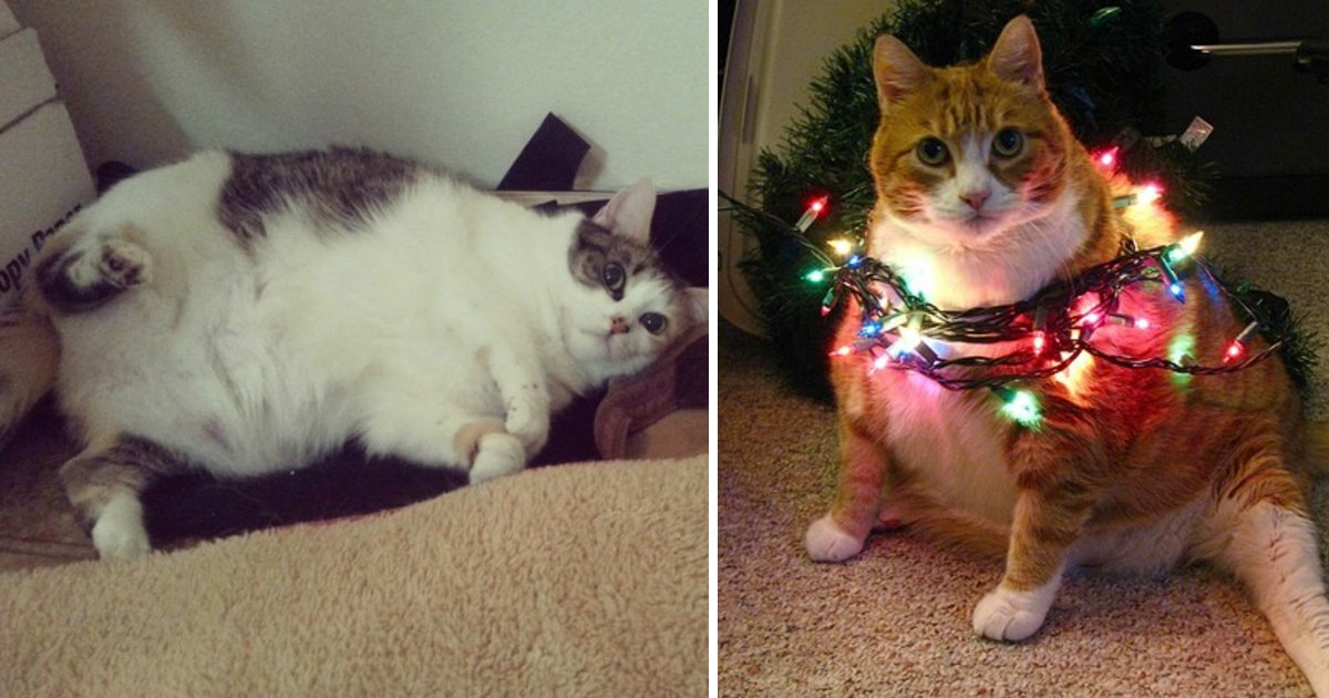 4 222.jpg?resize=1200,630 - 25 Reasons Fat Cats Make The Best Pets