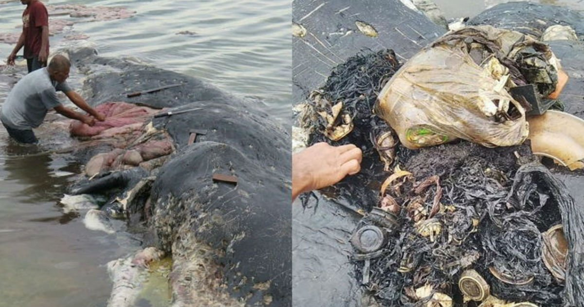 4 243.jpg?resize=1200,630 - お腹の中が「ゴミだらけ」のまま、悲惨に人生の終わりを迎えた「巨大マッコウクジラ」