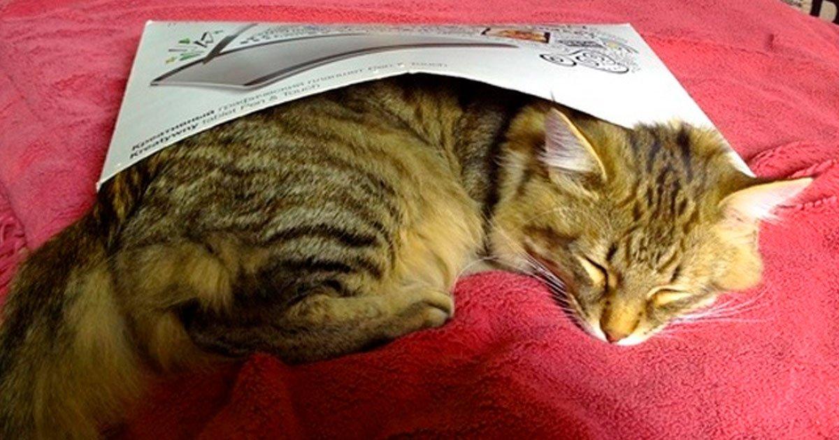 4 28.jpg?resize=1200,630 - 15 Pruebas indiscutibles de que los gatos crecen demasiado rápido