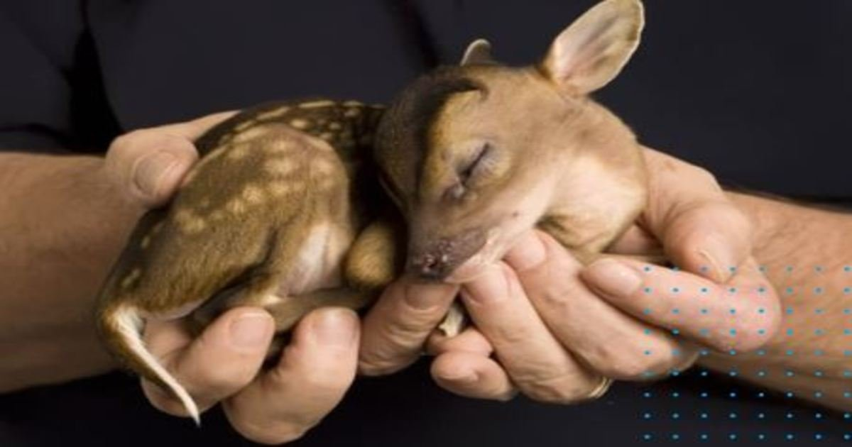 4 295.jpg?resize=1200,630 - 35+ Adorable Baby Animals That Shouldn't Be Allowed To Be This Cute