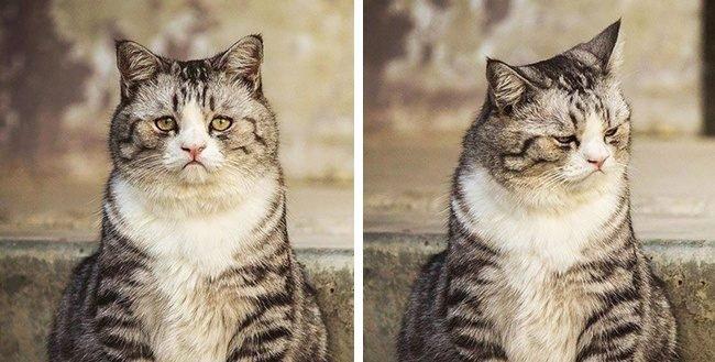 436605 4 650 a542d8629a 1484644800 e1555383824656.jpg?resize=1200,630 - 17 Hilarious Cats That Deserve An Oscar