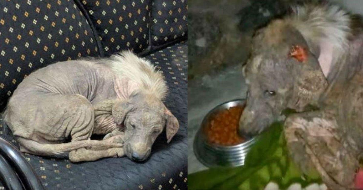 5 101.jpg?resize=1200,630 - 毛が抜ける皮膚病に苦しみ、自ら動物保護センターへ訪ね「救助要請」した犬