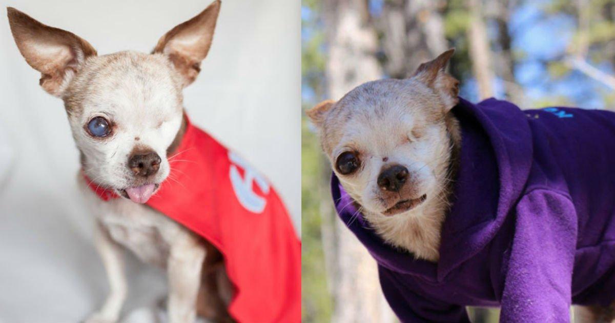 5 129.jpg?resize=412,232 - 子犬工場の檻の中で10年間、子犬を出産させられたチワワ…用済みで捨てられた姿に涙が止まりません…