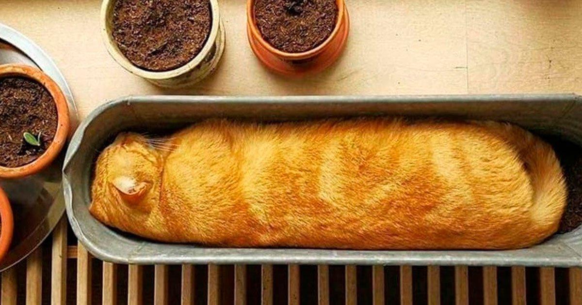 5 22.jpg?resize=1200,630 - 23 Fotografías que demuestran que los gatos pueden caber en cualquier lugar