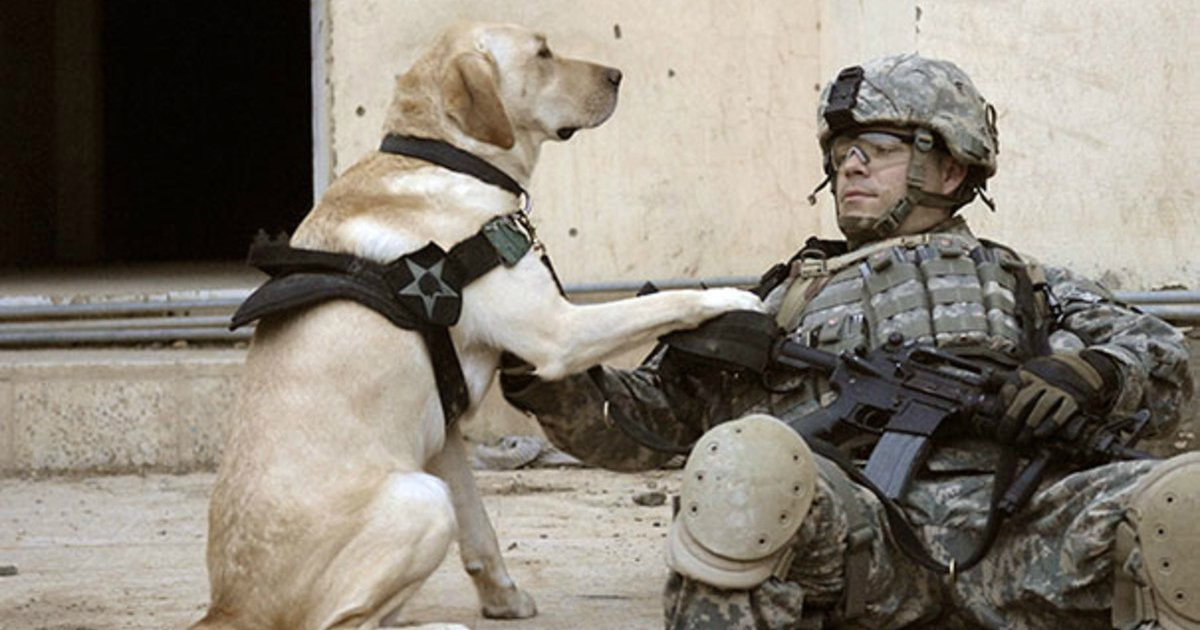 5 74.jpg?resize=1200,630 - 28 Powerful Photos of Service Dogs in Action That Prove Why They're Man's Best Friend