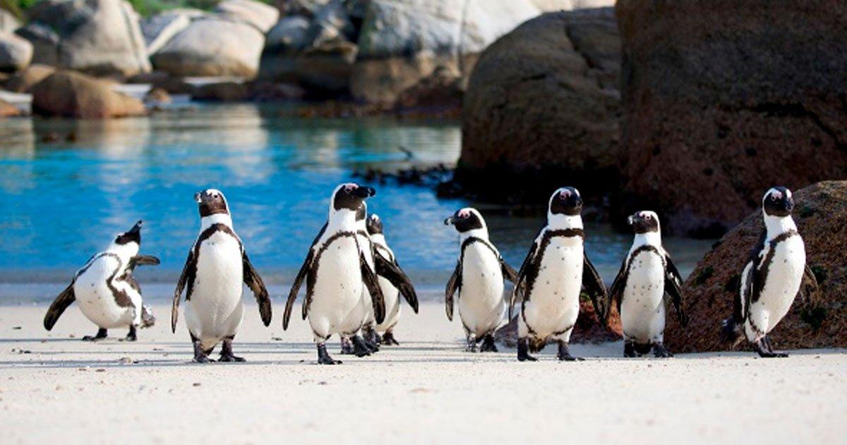 5 90.jpg?resize=1200,630 - 20 Fotografías que demuestran que no hay nada mejor que un pingüino