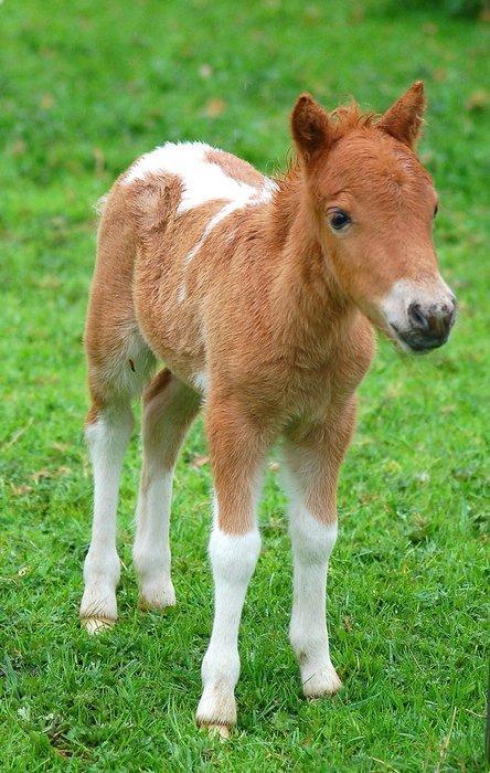 bebe_cheval