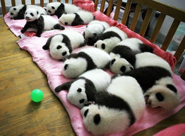 bebe_panda