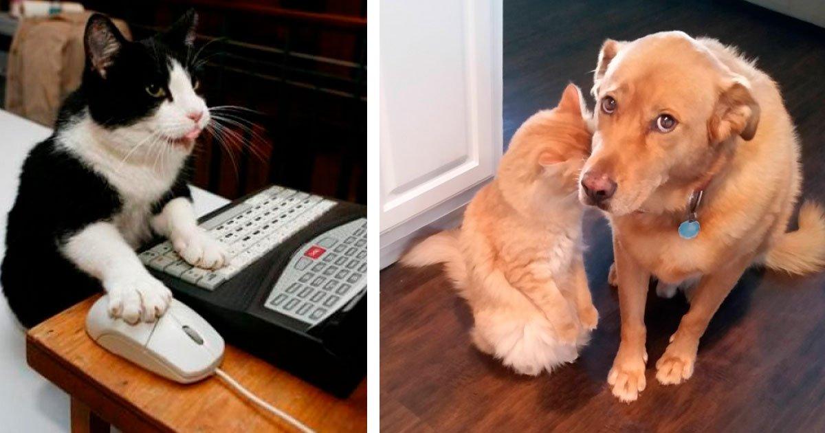 6 89.jpg?resize=412,232 - 35 Fotos en las que la vida con animales se ve retratada tal y como es