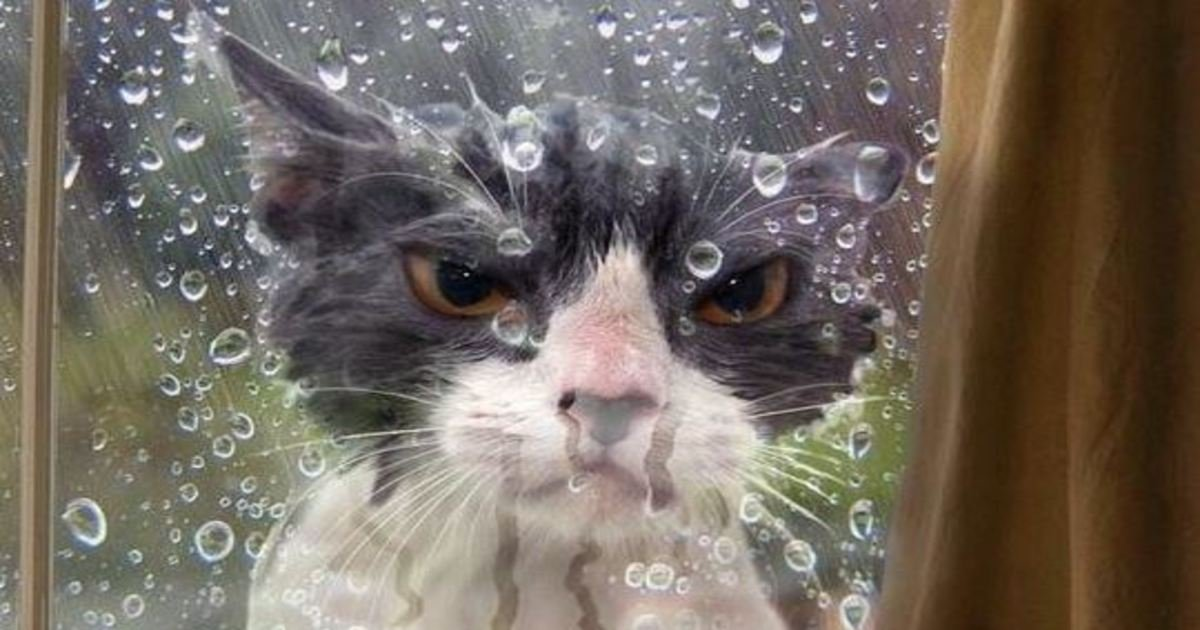 6 91.jpg?resize=1200,630 - 23 Cats Who've Made Very Poor Life Choices. #9 Is Having The Worst Day Ever.