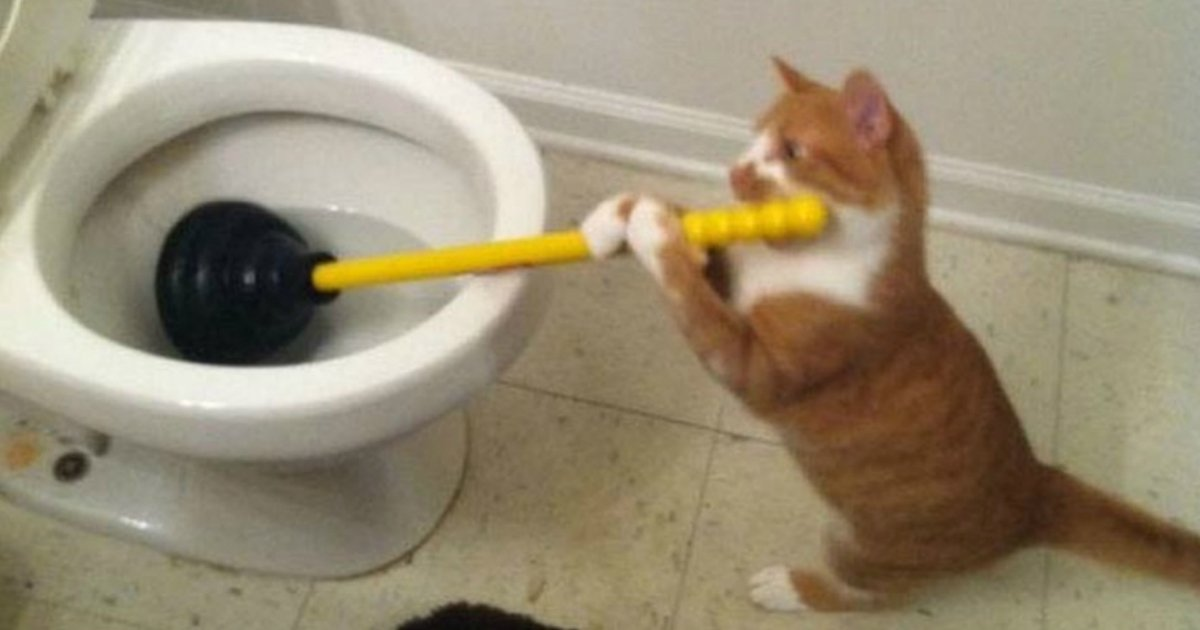 8 29.jpg?resize=1200,630 - 20 Cat Posts on Tumblr That Are Impossible Not to Laugh At