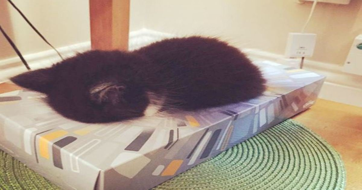 8 70.jpg?resize=1200,630 - 30+ Funny Pets Sleeping In The WEIRDEST Places.