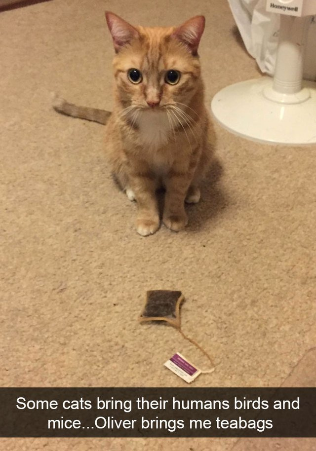 Cat brought his person a teabag