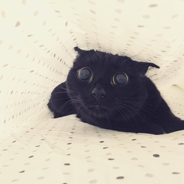 Cat underneath sheets